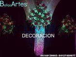 Bellas Artes foto 2