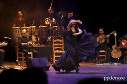 Flamenco Pura Sangre